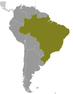 Connect2 - Brazil Map