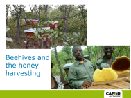 sister-yvonne-harvesting-honey